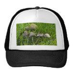 Morning Mushrooms Trucker Hat