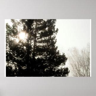 Morning Pine Poster