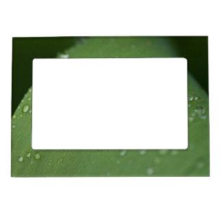 Morning Rain Magnetic Photo Frame