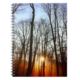 Morning Rays Peeking Through The Trees Notebook