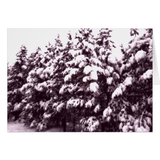Morning Snowscape, Conifer, CO Card