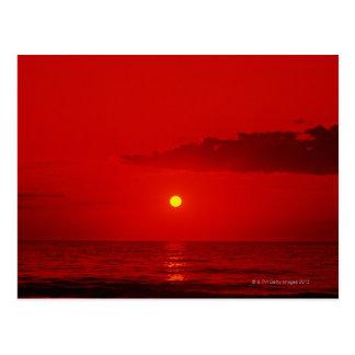 Morning Sun 2 Postcard