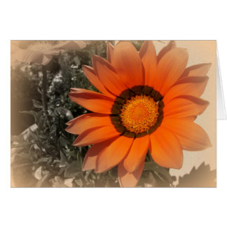 Morning Sun.. Card