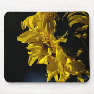 Morning Sunflower Mouse Pad