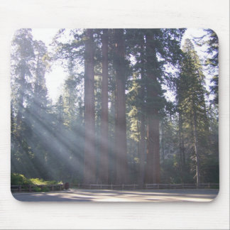 Morning Sunlight at the General Grant Tree. Mouse Pad