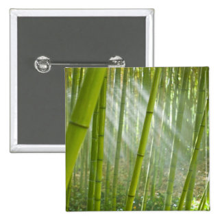 Morning sunlight filtering through bamboo 2 inch square button