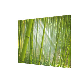 Morning sunlight filtering through bamboo canvas print