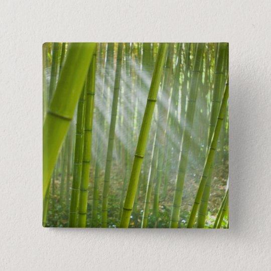 Morning sunlight filtering through bamboo pinback button