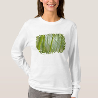 Morning sunlight filtering through bamboo T-Shirt