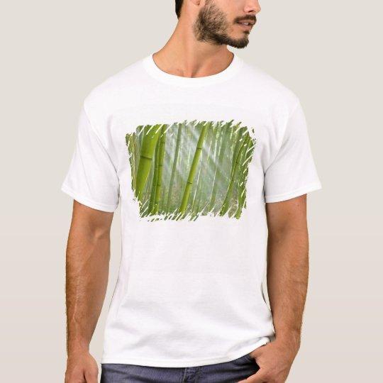 Morning sunlight filtering through bamboo T-Shirt