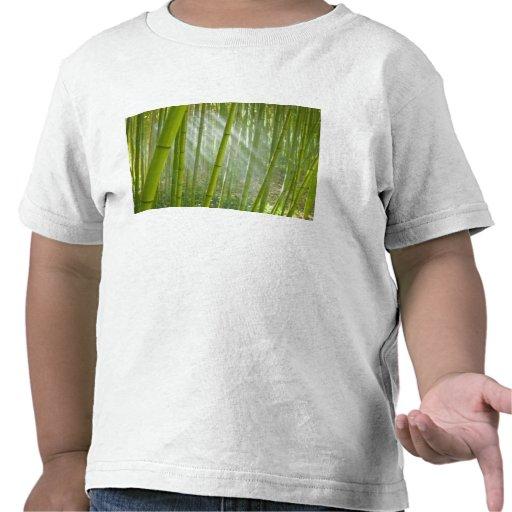 Morning sunlight filtering through bamboo t shirt