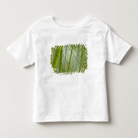 Morning sunlight filtering through bamboo toddler t-shirt