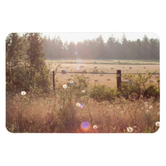 Morning Sunlight; No Text Magnet