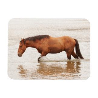 Morning swim for a horse magnet