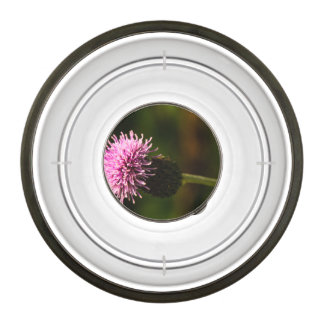 Morning Thistle Bowl