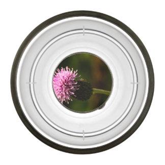 Morning Thistle Pet Bowl