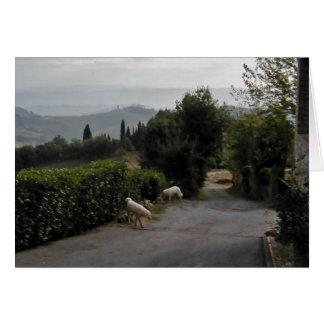Morning Walk In San Gimignano Card
