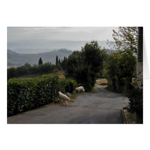Morning Walk In San Gimignano Greeting Cards
