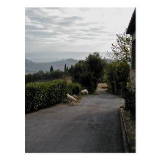 Morning Walk In San Gimignano Postcard