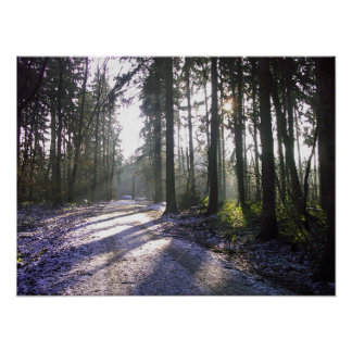 Morning Walk in the winter sun Poster