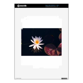 Morning Water Lily iPad 2 Decal