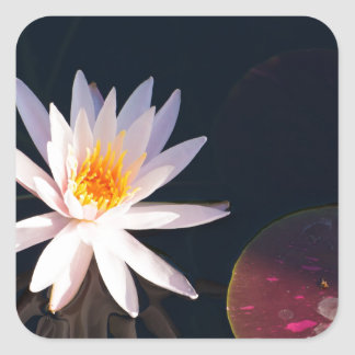 Morning Water Lily Square Sticker