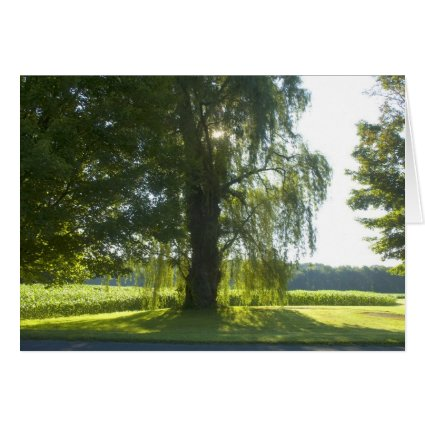 Morning Willow - Start the Day off Bright Sunlight Card