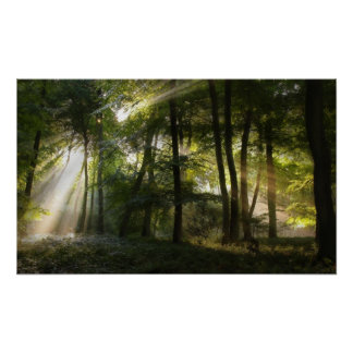 Morning Woodland Light Poster