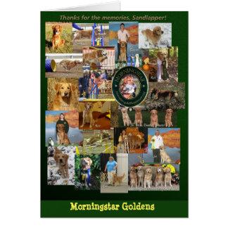 Morningside Golden Retrievers Greeting Card
