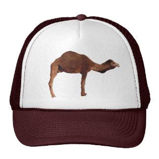 Moroccan Camel Hat