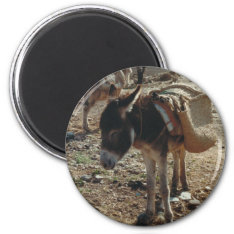 Moroccan Mule Magnet at Zazzle