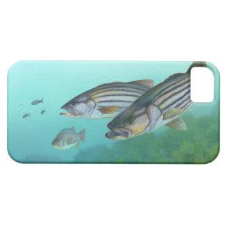 Morone atlántico Saxatilis de los pescados de la Funda Para iPhone 5 Barely There