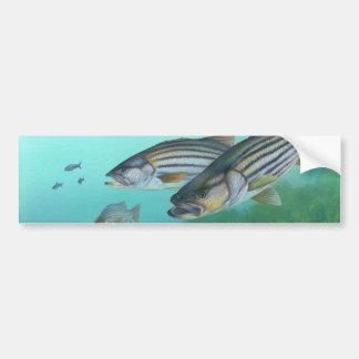 Morone atlántico Saxatilis de los pescados de la l Etiqueta De Parachoque