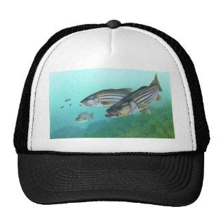 Morone atlántico Saxatilis de los pescados de la l Gorros Bordados