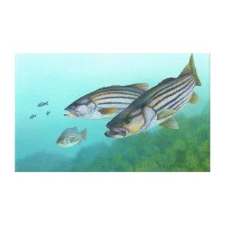 Morone atlántico Saxatilis de los pescados de la l Impresión En Lona Estirada