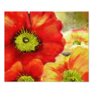 Morpheus's Abstract Red Poppies Photo Print