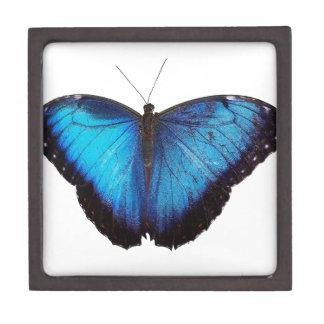 Morpho azul Butterflie Cajas De Joyas De Calidad