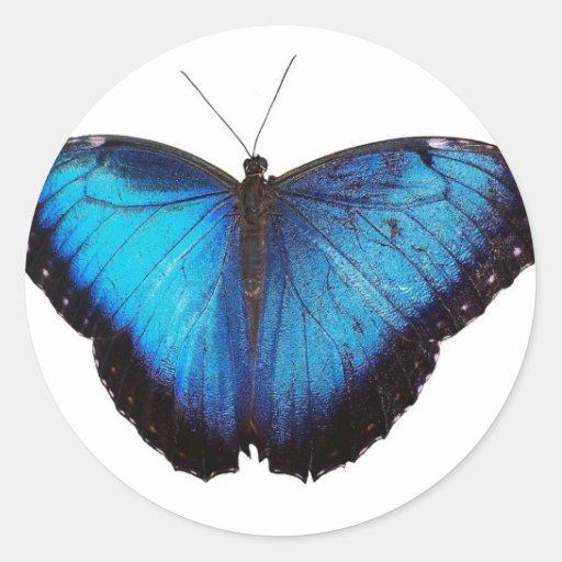 Morpho azul Butterflie Etiqueta Redonda