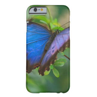 Morpho azul funda barely there iPhone 6