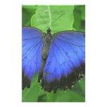 Morpho azul papelería de diseño