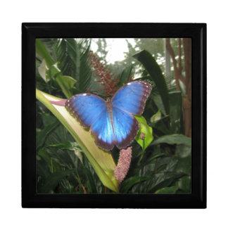 Morpho azul Peleides Caja De Regalo