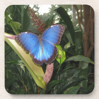 Morpho azul Peleides Posavaso