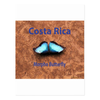 Morpho butterfly Costa Rica Postcard