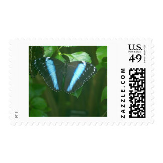 Morpho Butterfly Stamps