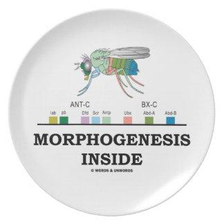 Morphogenesis Inside Drosophila Fruit Fly Genes Dinner Plate