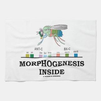Morphogenesis Inside Drosophila Fruit Fly Genes Hand Towel
