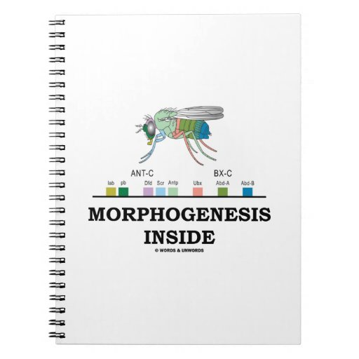 Morphogenesis Inside Drosophila Fruit Fly Genes Notebooks