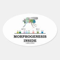 Morphogenesis Inside Drosophila Fruit Fly Genes Oval Sticker