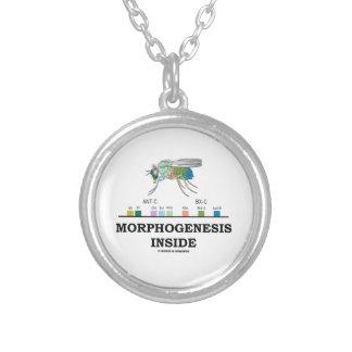 Morphogenesis Inside Drosophila Fruit Fly Genes Silver Plated Necklace