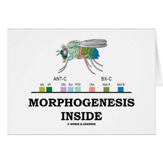 Morphogenesis Inside (Fruit Fly Drosophila Genes) Card
